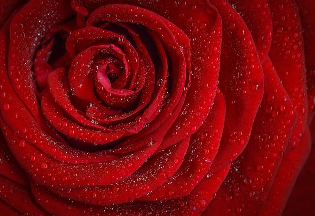 OSHO Mystic Rose - meditative therapy